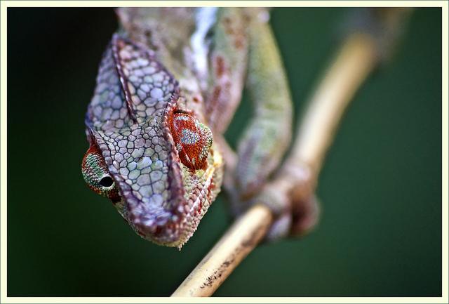 Fotografía: Vicente Villamon en Flickr / Usada bajo licencia Creative Commons