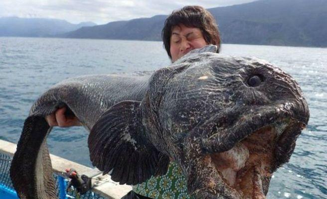 ¿Este pez mutante fue encontrado en cercanías de Fukushima?... Descúbrelo respondiendo nuestro quiz semanal.