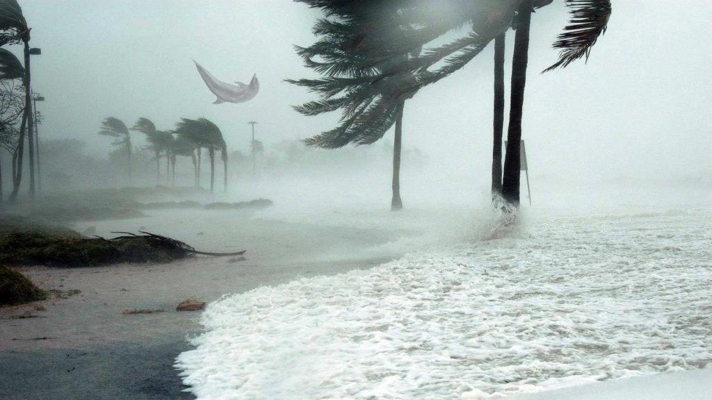 ¿Es verídica la foto de este delfín elevado por la fuerza del huracán Matthew?... ¡Responde el quiz!